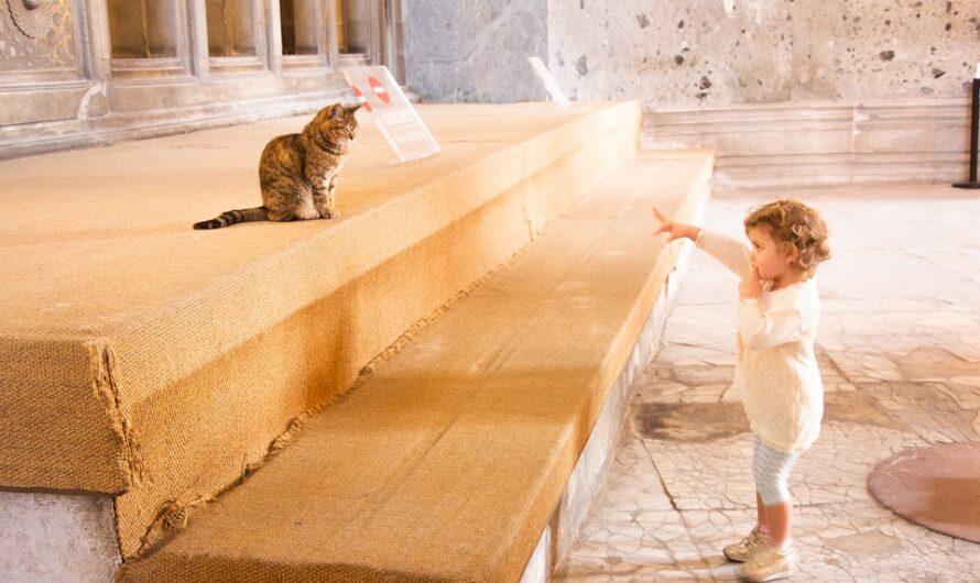 Bőség Angyalainak áldása: Tisztítsd meg magad!