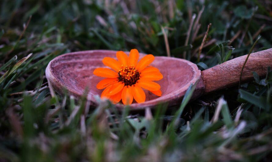 Felemelkedett mesterek áldása hétfő hajnalra: Jótékonyság