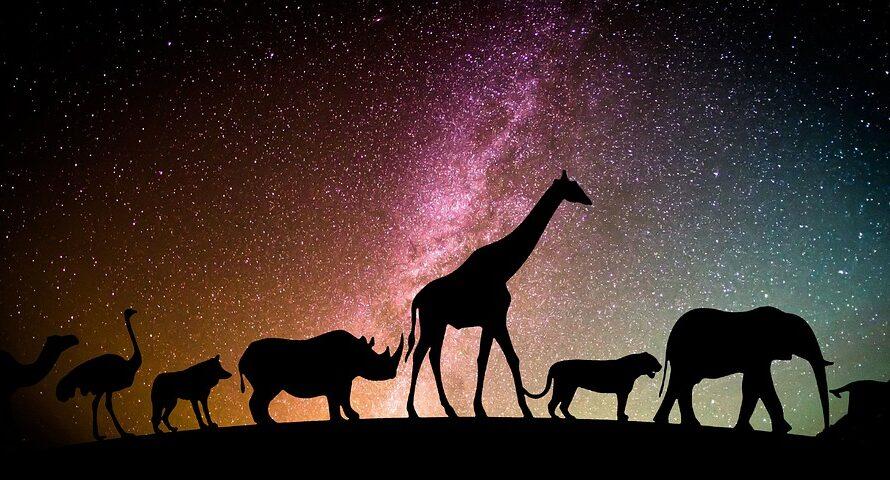 A 2022-es év szerencse csillagai megtalálnak: Mely csillagjegyeket kíséri Áldás?